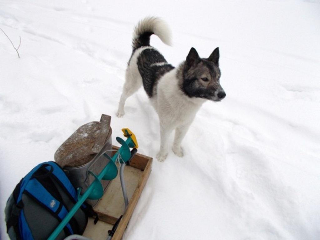 собака рыболов фото